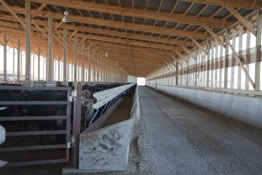 Photo Gallery Of Cattle Barns By Eps