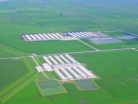 Chicken Layer Facility