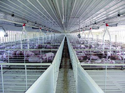 Hog Confinement Buildings Engineered And Manufactured By