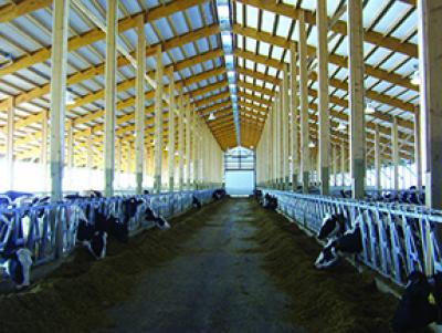 Cow Comfort Equals Profitability